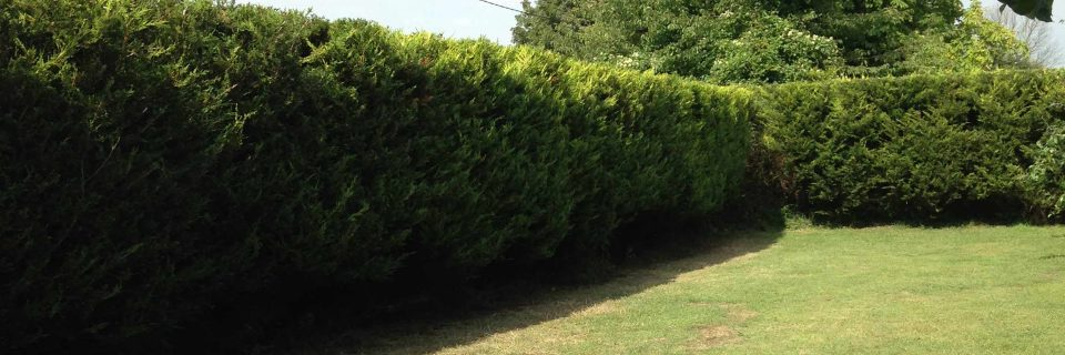 Offering the Complete Tree Surgery 