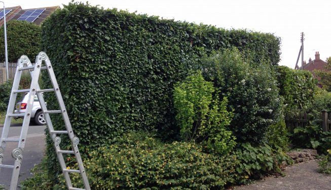 Landscaping_Service_Essex_0275-(2)
