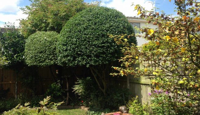Braintree soft landscaping services