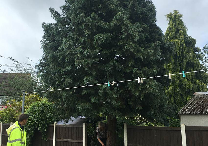 Witham Tree care
