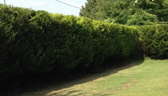 landscaping in witham