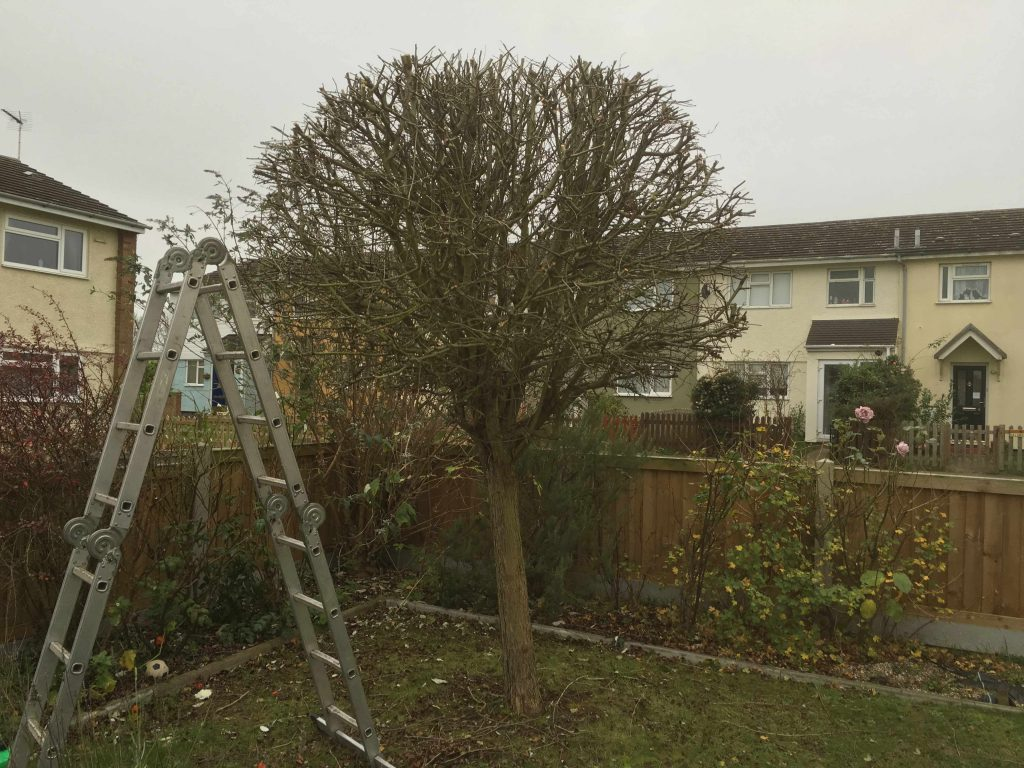 Witham Tree Surgery